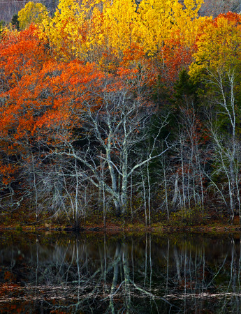Autumn reflections of trees and water in New Brunswick, Canada.