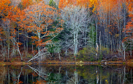 autumn colour: Autumn reflections of trees and water in New Brunswick, Canada.