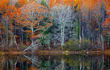Herbst-Reflexionen der Bäume und Wasser in New Brunswick, Kanada. Standard-Bild - 43488214