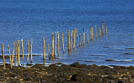 weir: Fishing weir wooden poles at low tide at shores edge. Stock Photo