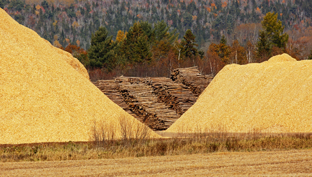 bark mulch: Pile of wood chips, sawdust against an autumn forest. Stock Photo