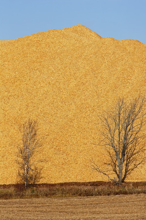 Pile of wood chips, sawdust against a blue sky. Stockfoto