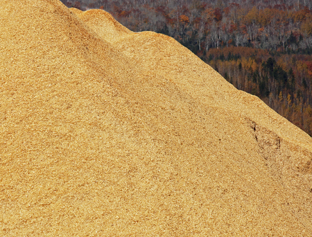 Pile of wood chips, sawdust against an autumn forest. Imagens