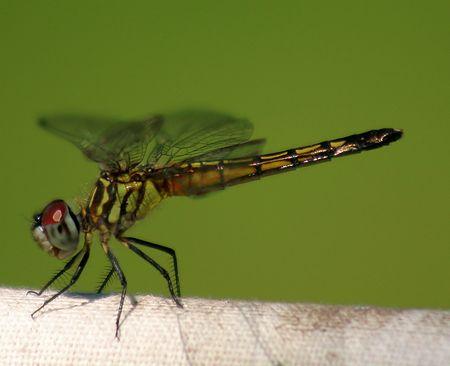 A dreagonfly close-up. Banco de Imagens - 233742