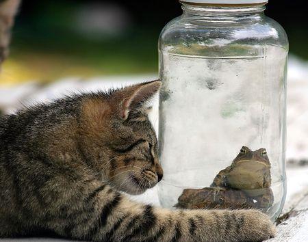 hunted: Un gato con hambre y un sapo nervioso.