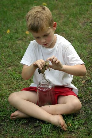 petting: A little boy petting a toad.