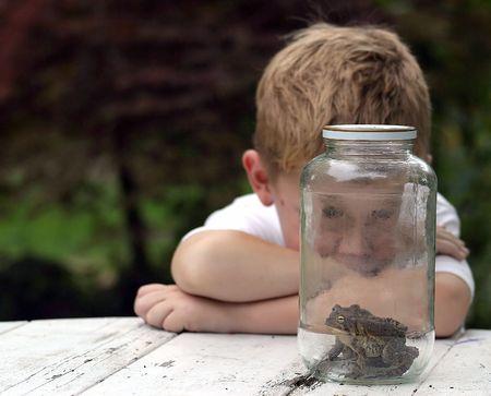 Un niño mirando a unos sapos en un frasco.  Foto de archivo - 233717