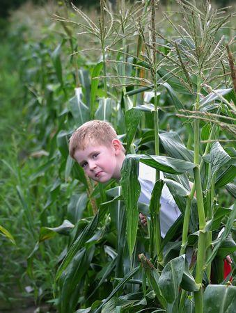 hide and seek: A little boy playing hide and seek in a corn field.