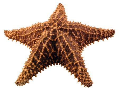 A starfish isolated on a white background.