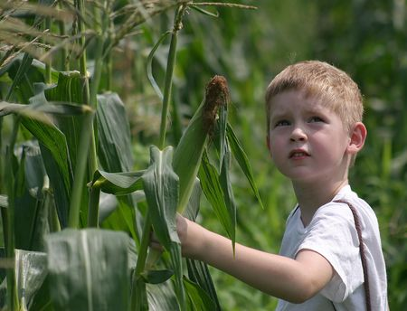 apprehension: A boy looks to the sky while picking corn Stock Photo