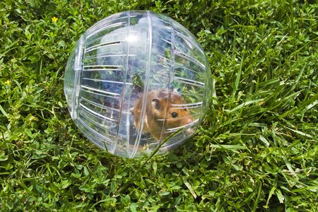 wanting: Rodent in a hamster ball wanting to go down gopher hole, so close, but so far away