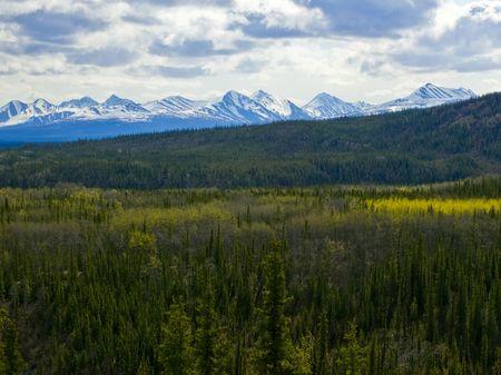 denali: Fields of Denali National Park Stock Photo