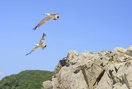 gulls jumped off the cliff Reklamní fotografie