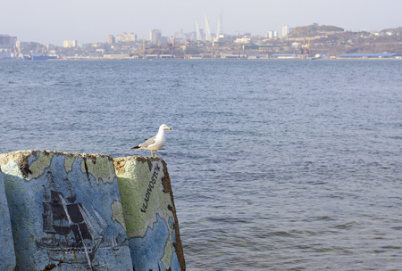 city Seagull admires the view of the city