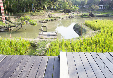 wooden walkway with pond and rice field in the background. photo