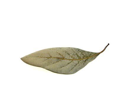 Dry leaves on white background Stock fotó