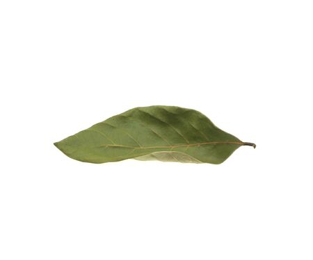 Dry leaves on a white background