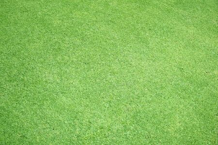 Green grass background green lawn pattern textured background. Stock fotó