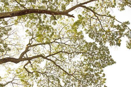 Tree branches on a white background Reklamní fotografie - 143136122