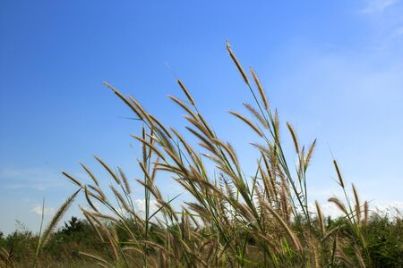 spring grass and blue sky on background