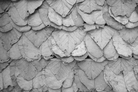 The background image is a dry leaf roof