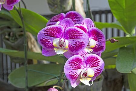 Beautiful orchids in garden at winter or spring Zdjęcie Seryjne