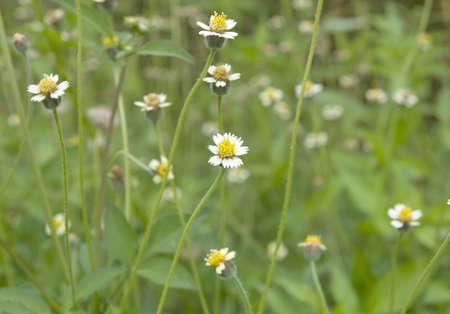 Roadside grass flowers. Spring meadow of flowers
