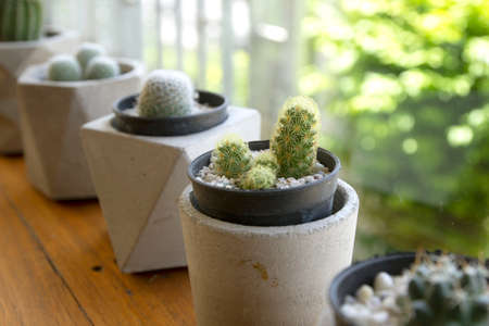 Dwarf Cactus Collection in coffee Shop.