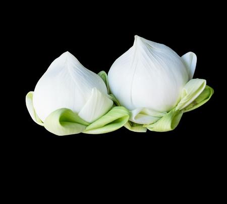 twin: twin lotus