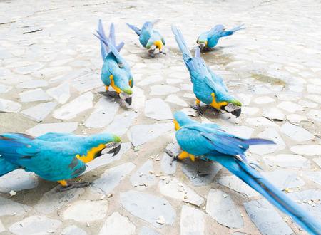 parot: parrot Stock Photo