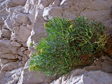 winning location: flowers grow on stones
