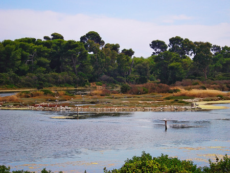 occupied: lake on Saint Margarita island occupied by a great number of waterfowl