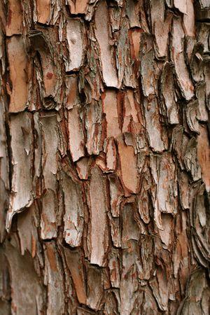 나무 껍질 세부 사항