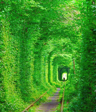 Romantic tunnel of lovers in the green leafs forest at summer, Ukraine.