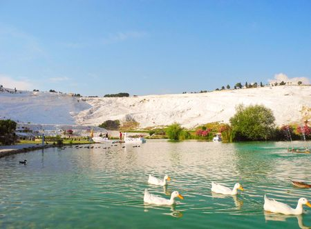 The pond with white ducks in Pamukkale, Turkey. Stock Photo