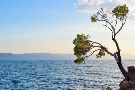 Lonely pine tree on a rock, Punta Rata Beach, Brela, Croatia. Imagens