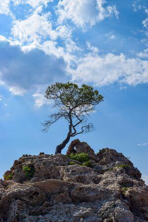 Lonely pine on the rock. Drance beach, Croatia.   版權商用圖片