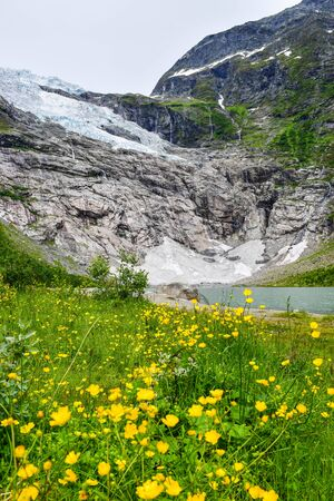 The Boyabreen glacier, which is the sleeve of the large Jostedalsbreen glacier and delicate wild yellow flowers in the foreground. The melting glacier forms the lake with clear water.  Norway. 写真素材