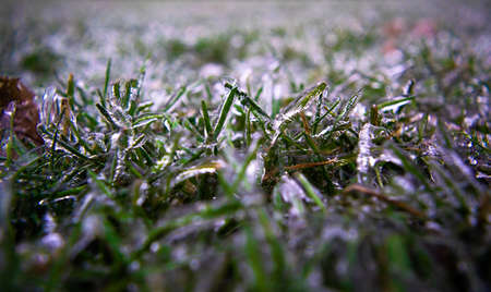 Green blades of grass on lawn are covered with transparent ice. Close-up. Winter weather surprises. Unexpected ice. Sharp drop in temperature froze raindrops, covering everything with slippery ice.