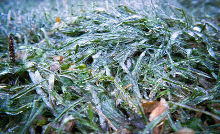 Green blades of grass are covered with transparent ice. Close-up. Winter weather surprises. Unexpected ice. Sharp drop in temperature froze raindrops, covering everything with slippery ice.