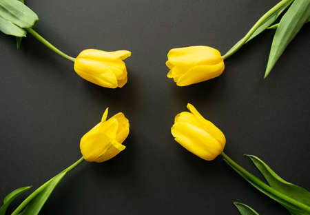 Four beautiful fresh yellow tulip flowers are arranged in buds towards each other from four corners of the composition on a black paper background. Greeting card. Flat lay. Copy space, minimal style. 免版税图像