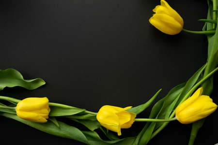 Lovely fresh yellow tulip flowers on black paper background. Selective focus. Greeting card. Flat lay. Copy space, template for lettering or text.