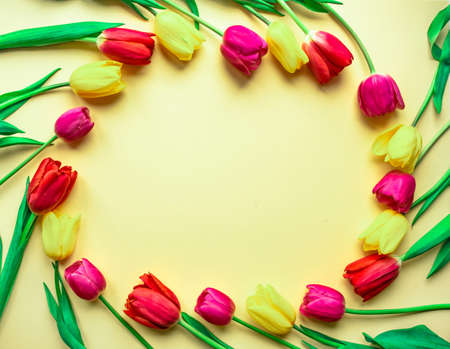 Colorful lovely fresh tulips in the form of a circle on a light yellow paper background. Greeting card for holiday with copy space, template for lettering or text. Selective focus. Flat lay.