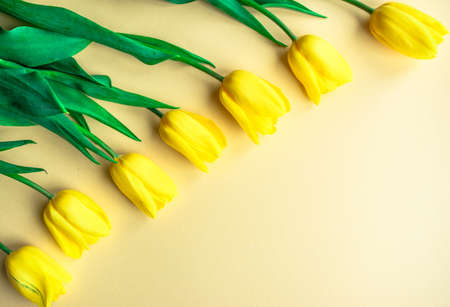 Sunny yellow spring flower arrangement. Yellow fresh tulips on yellow paper background. Greeting card for Women's day, Mother's day, Valentine's Day, Family Day or other holiday. Flat lay. Copy space.