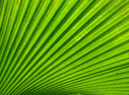 veined: Close up of green leave texture
