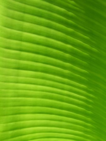 veined: Closeup of green leaf for background Stock Photo