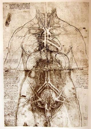 vitruvian man: Foto del Hombre de Vitruvio de Leonardo Da Vinci
