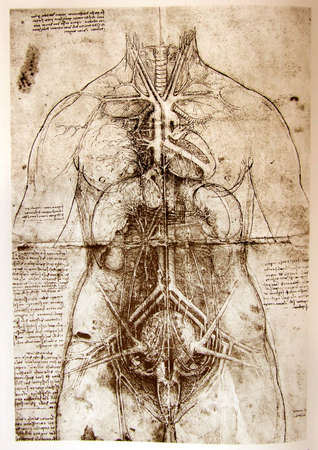 Photo of the Vitruvian Man by Leonardo Da Vinci