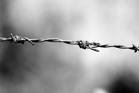Image of barbwire sections with sharp thorns Stock Photo - 4772502