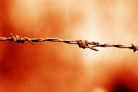 thorns  sharp: Image of barbwire sections with sharp thorns